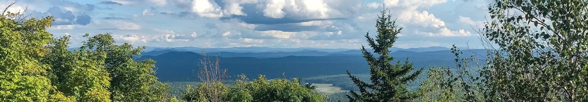 A view of blue mountains in the background and trees in the foreground.