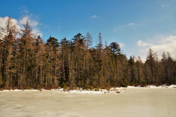 A beautiful bog lies just beyond the Big Pond (Credit: Wm.Hill/Hiking the trail to Yesterday)