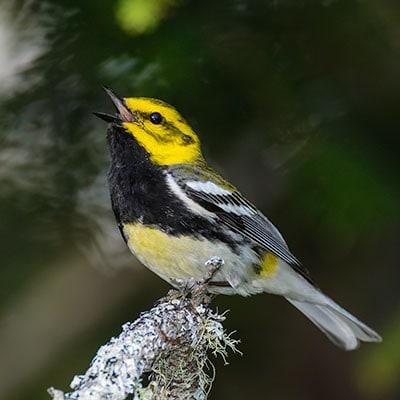 Bird Workshops