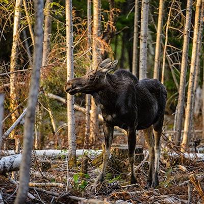 Moose Workshops