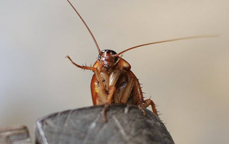 a cockroach infesttaion in a home