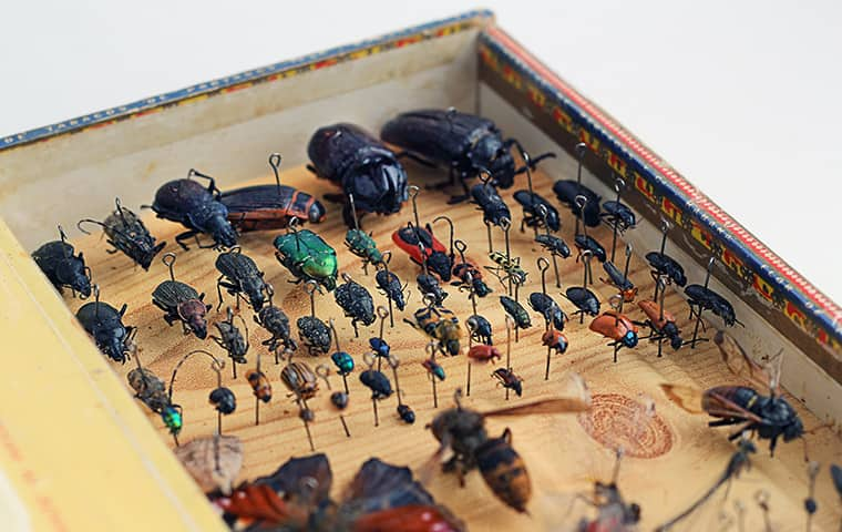 an insect display case in oregon