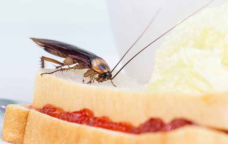 close up of a cockroach crawling on bread in a salem home