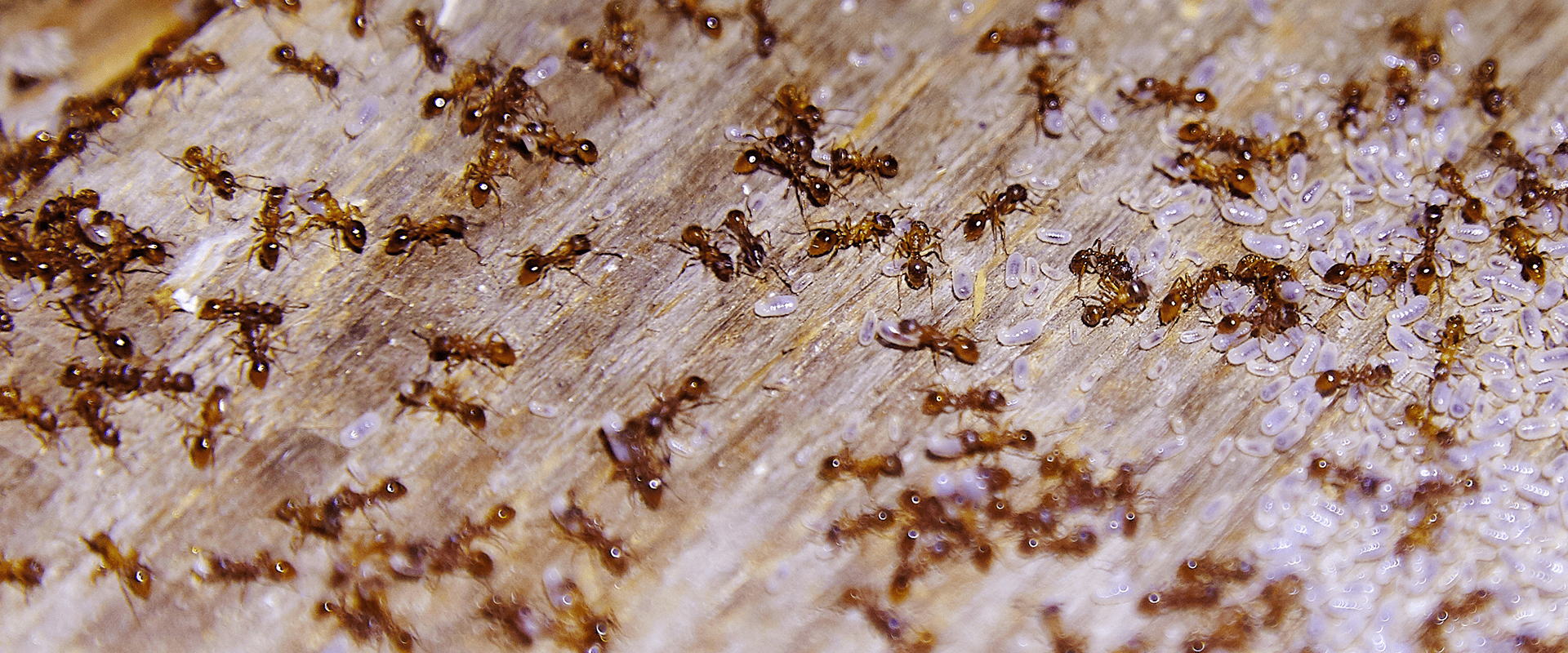 many ants crawling on a house porch in woodburn oregon