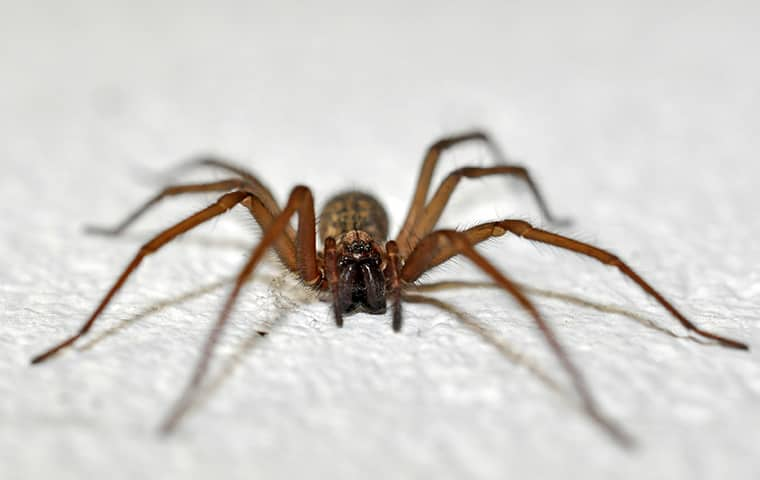 a spider crawling across white fabric in a woodburn home