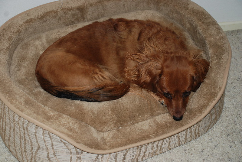 Dog in its bed