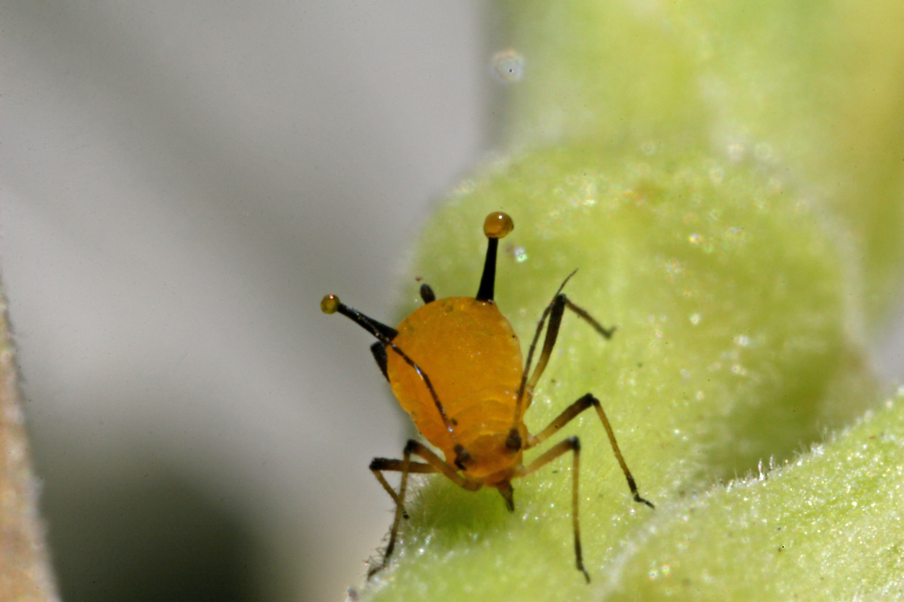Aphid on plant
