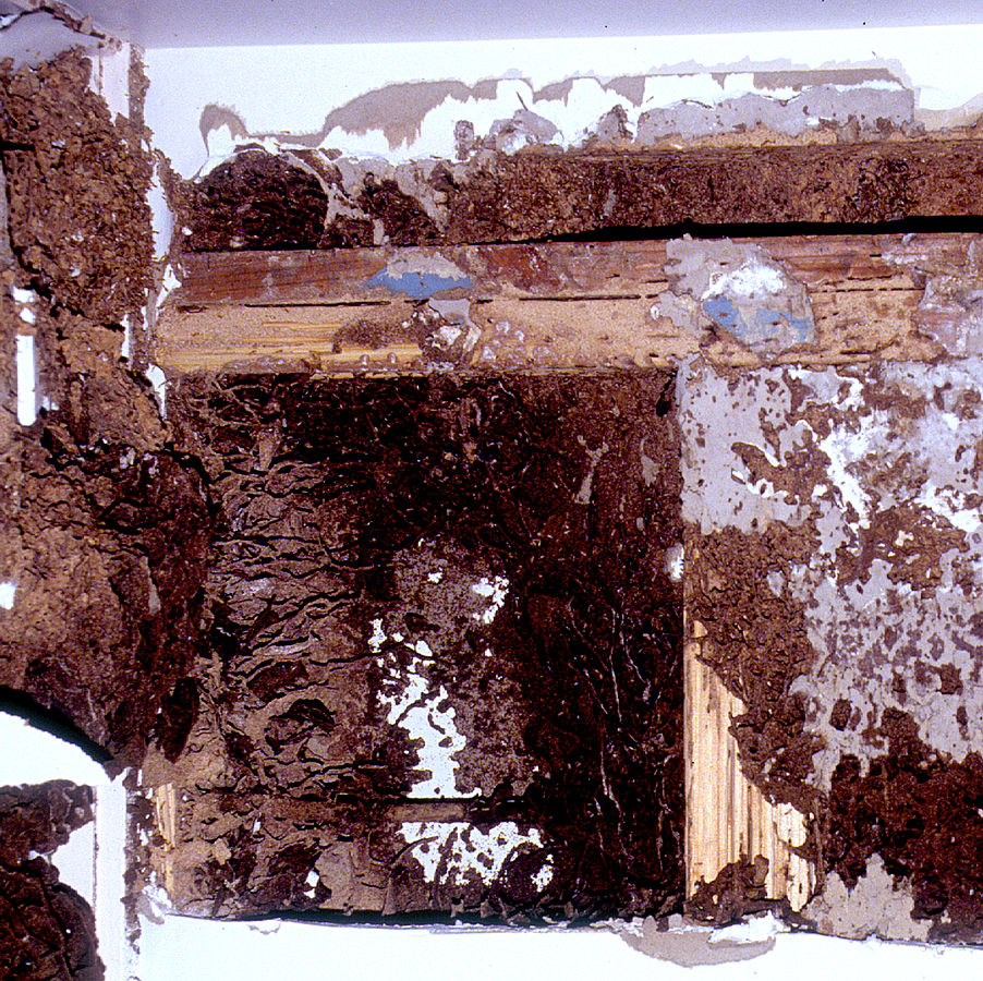 Severe termite damage in the interior of a wall