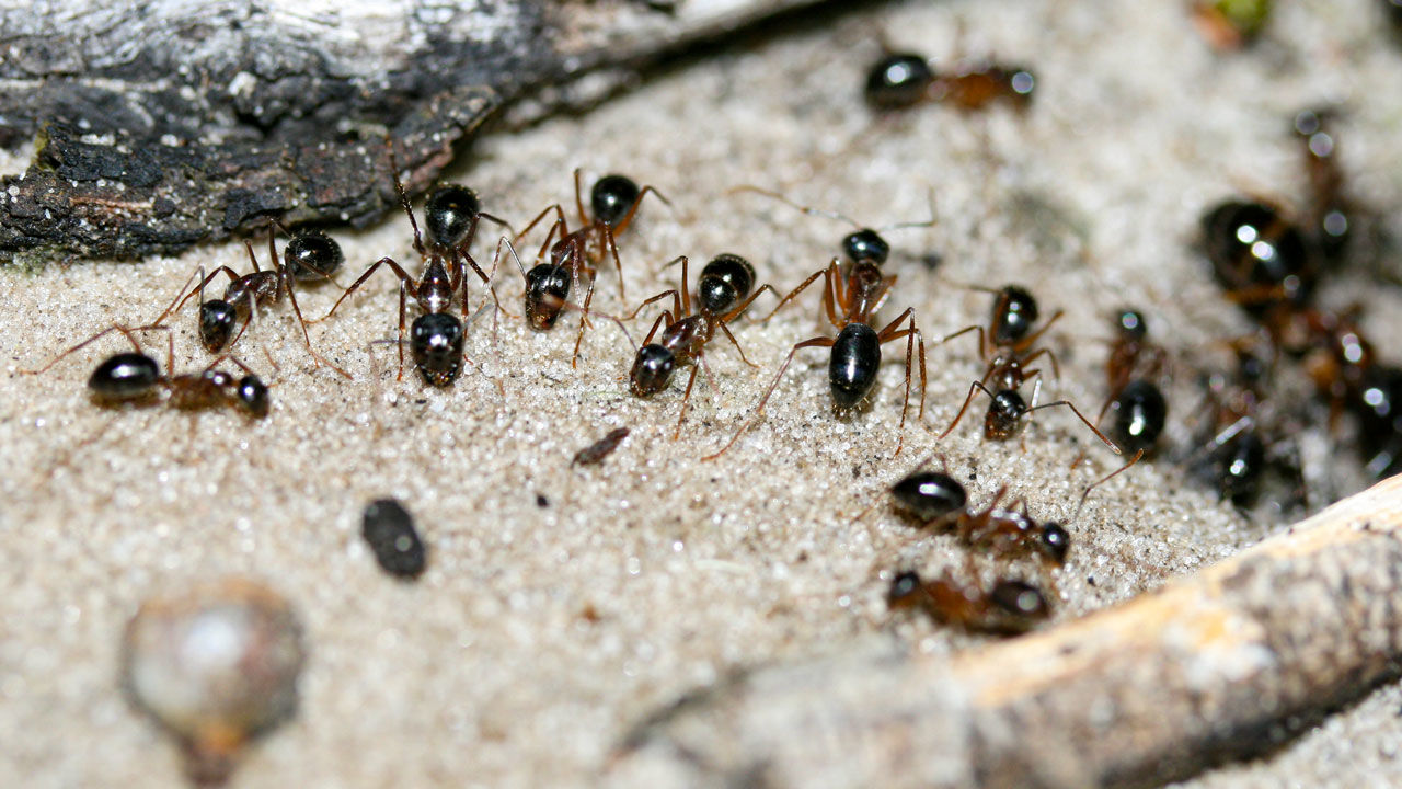 Ants can get into unsealed food, even at the grocery store