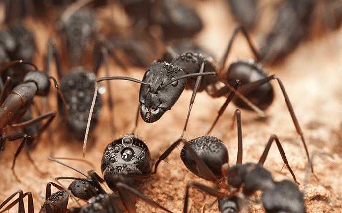 Colony of Ants on Wood
