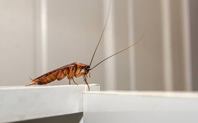 cockroach on counter top