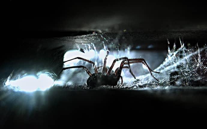 spider on north carolina home