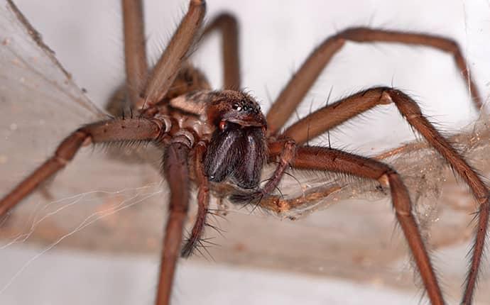 spider in north carolina basement