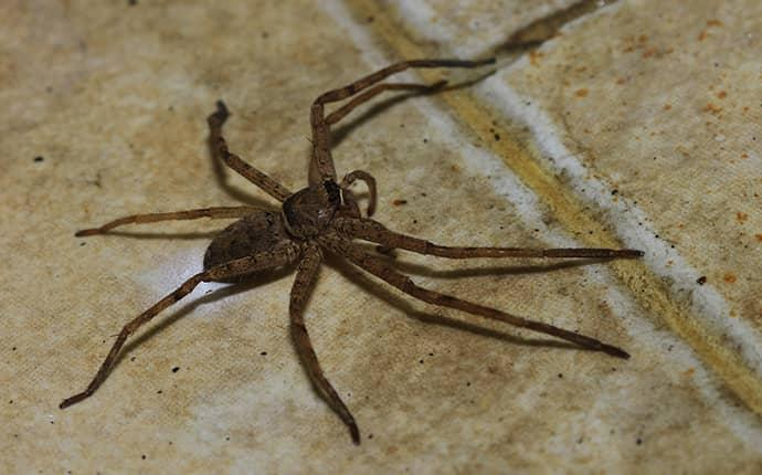 spider on floor in a lenoir home