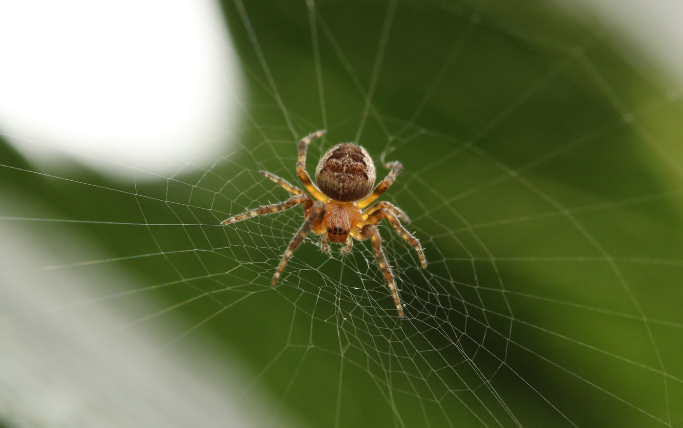 barn spider on spider web closeup photography