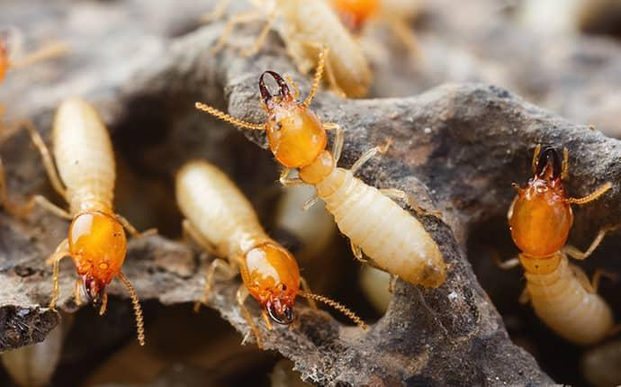 termites on a rock