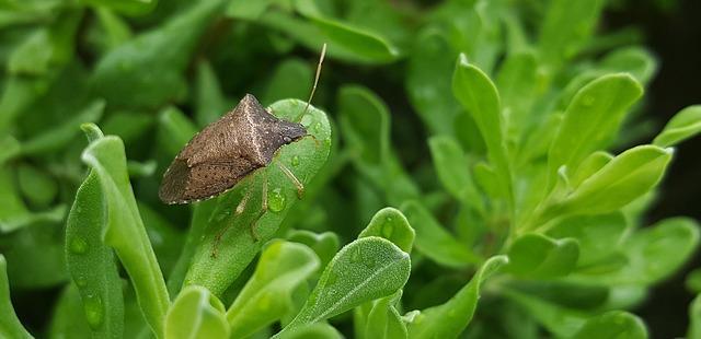 Stink bug perched on a leaf