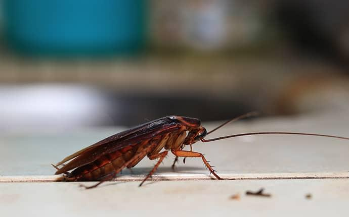 cockroach in nc kitchen