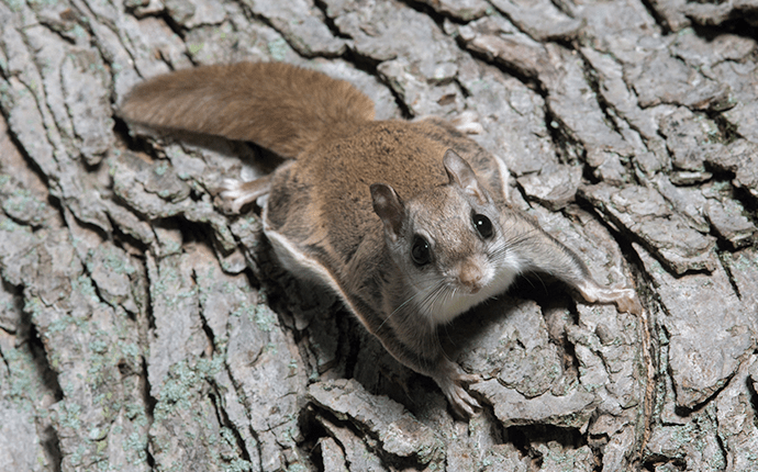 flying squirrel on tree