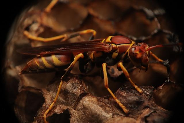 Paper Wasp in nest