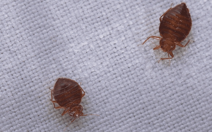 bed bugs in an nc hotel room