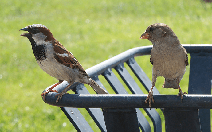 pest birds on trash can