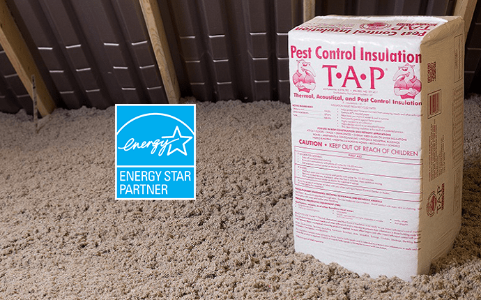pest control insulation in an attic