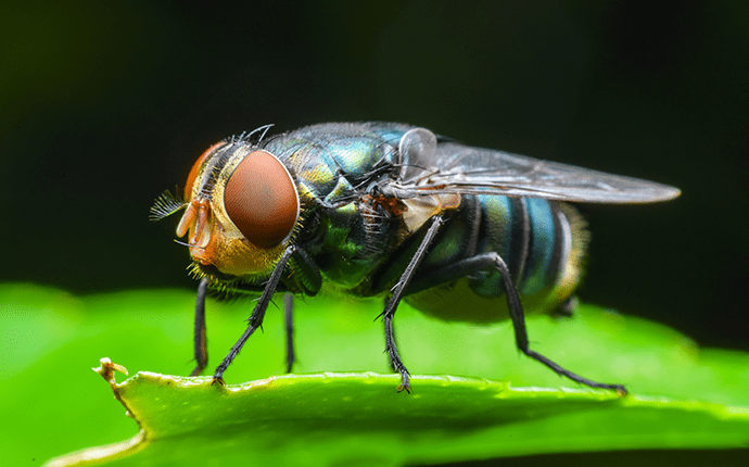 blow fly on a leaf outside lenoir home
