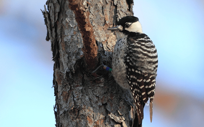 woodpecker on a tree branch outside north carolina home
