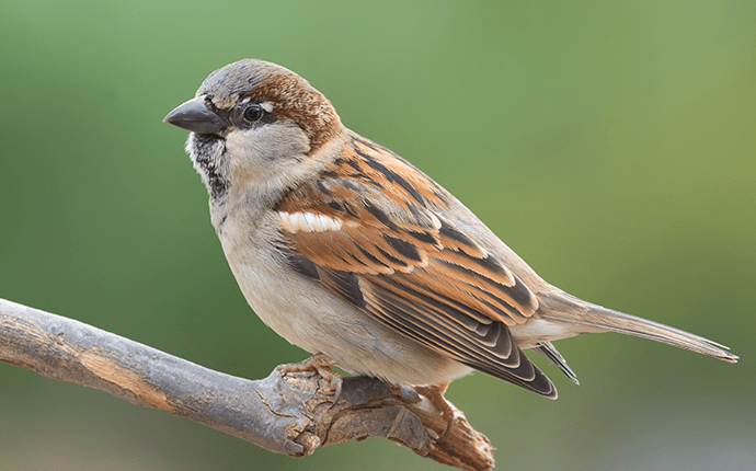 sparrow on a branch outside lenoir home