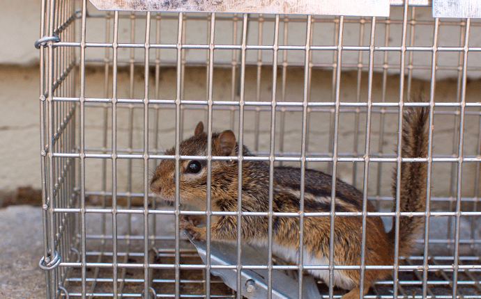 a small chipmunk in a cage