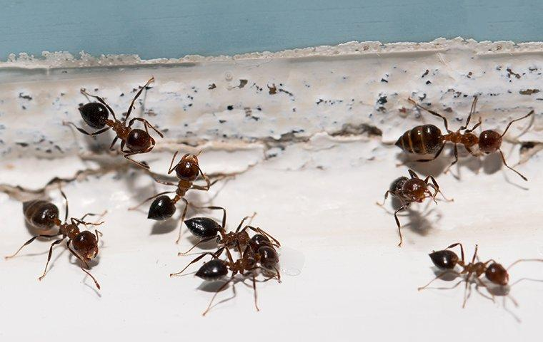 ants crawling inside of a home