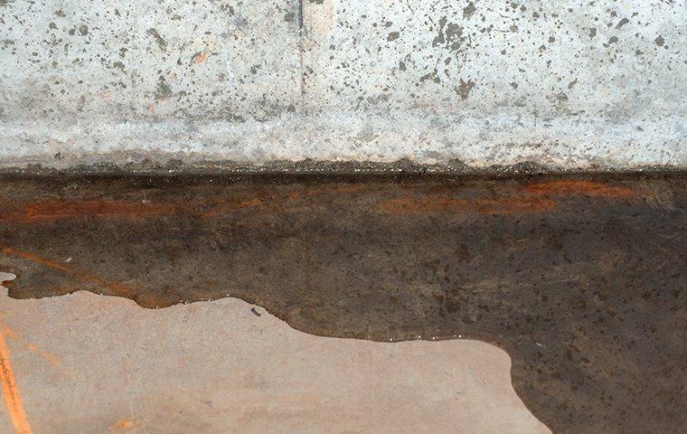 moisture control services in a wet basement