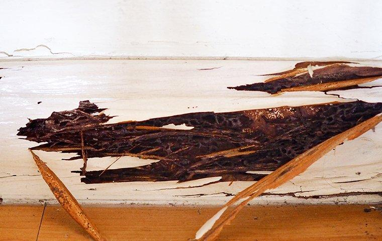 termite damage on a wall in a home