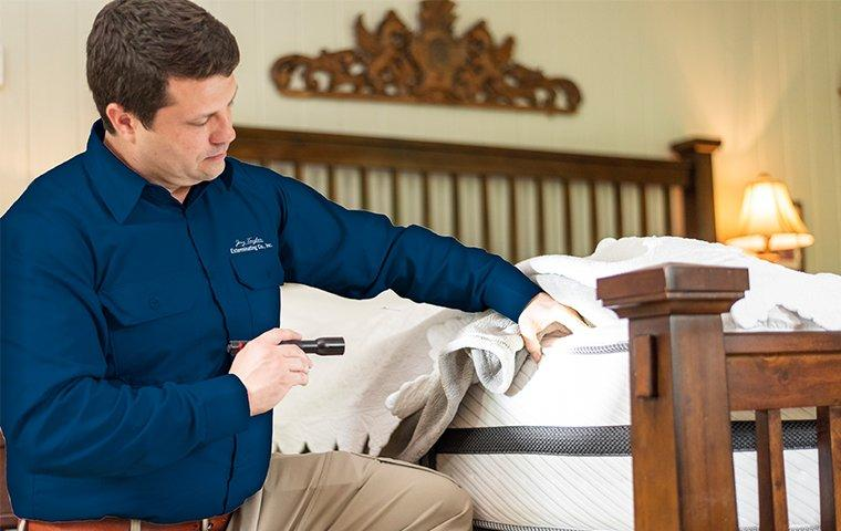 a pest control service technician inspecting for bed bugs