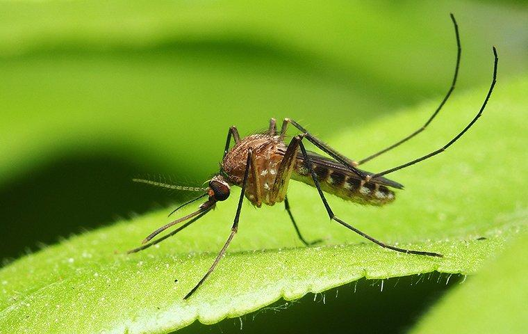 a mosquito crawling on a leaf