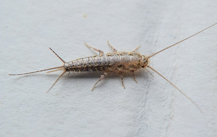 a silverfish crawling on the floor of a bathroom