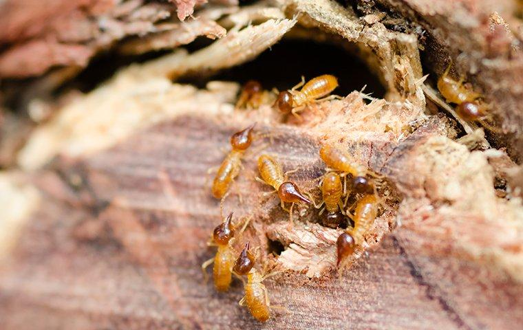 several termites burrowing into a tree