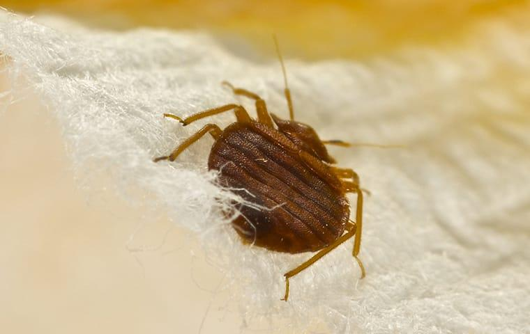 a bed bug infestation in a baltimore maryland bedroom