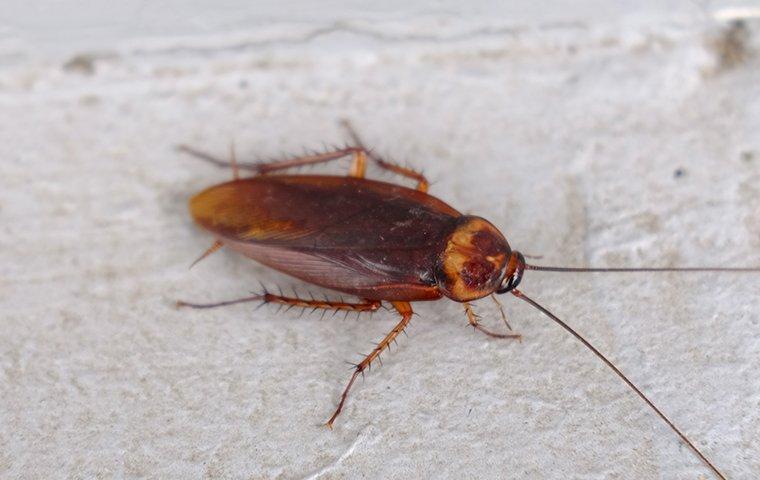 a cockroach crawling on a basement floor