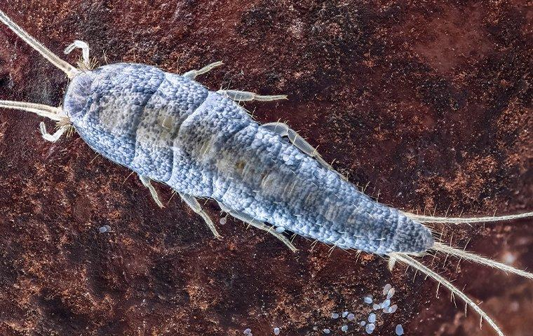 a silverfish in a home library