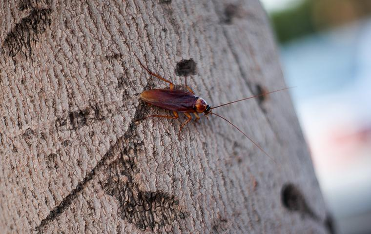a roach outside of a home in arbutus