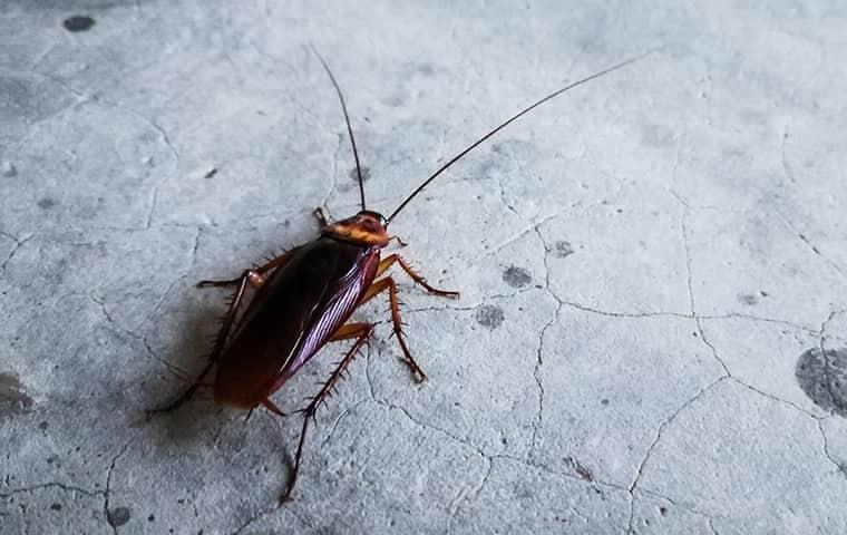 a roach inside a home in dayton