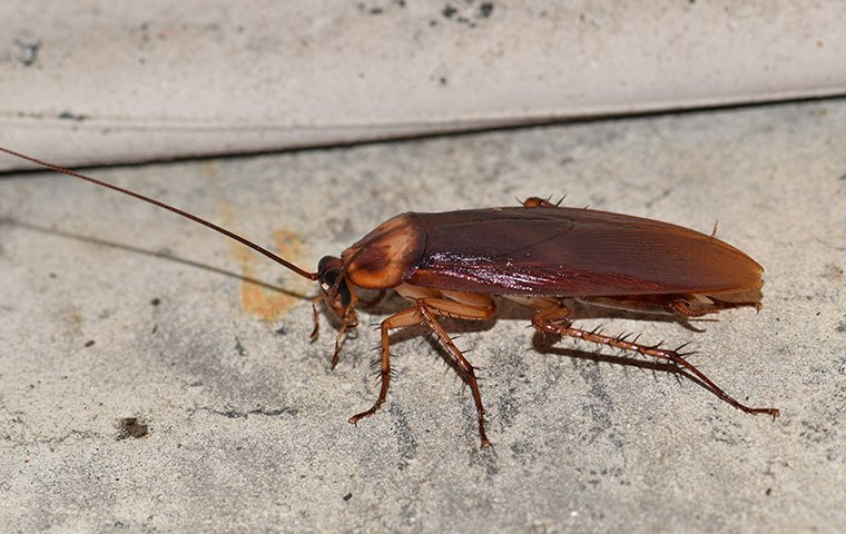 cockroach up close in basement