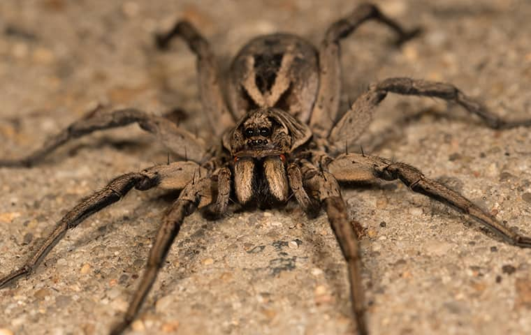 a large spider outside a home in edgewood