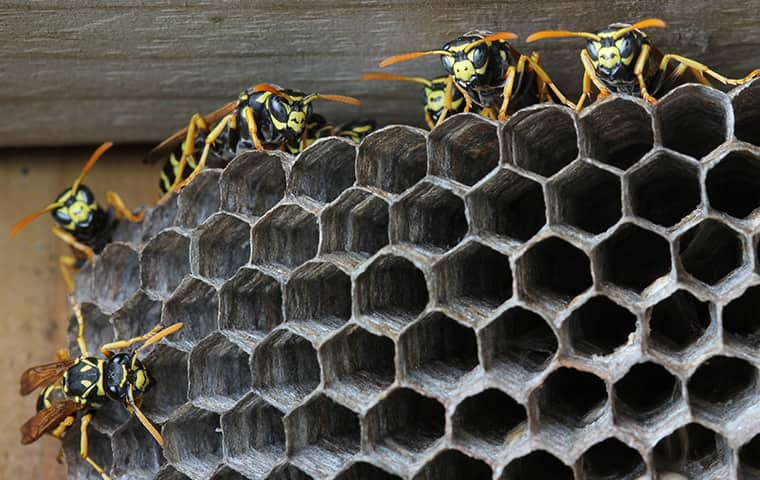 wasps on their nest outside a home in fallston