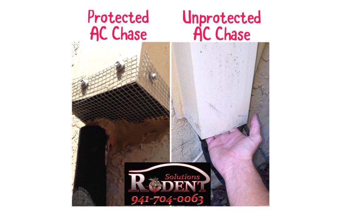 flashing protects from rodent access