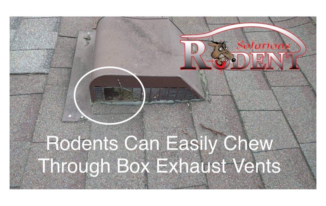 example of rodent access to roof