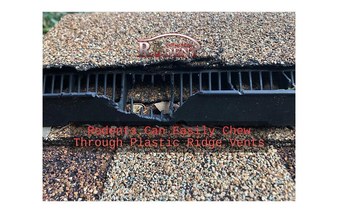 chewed ridge vent