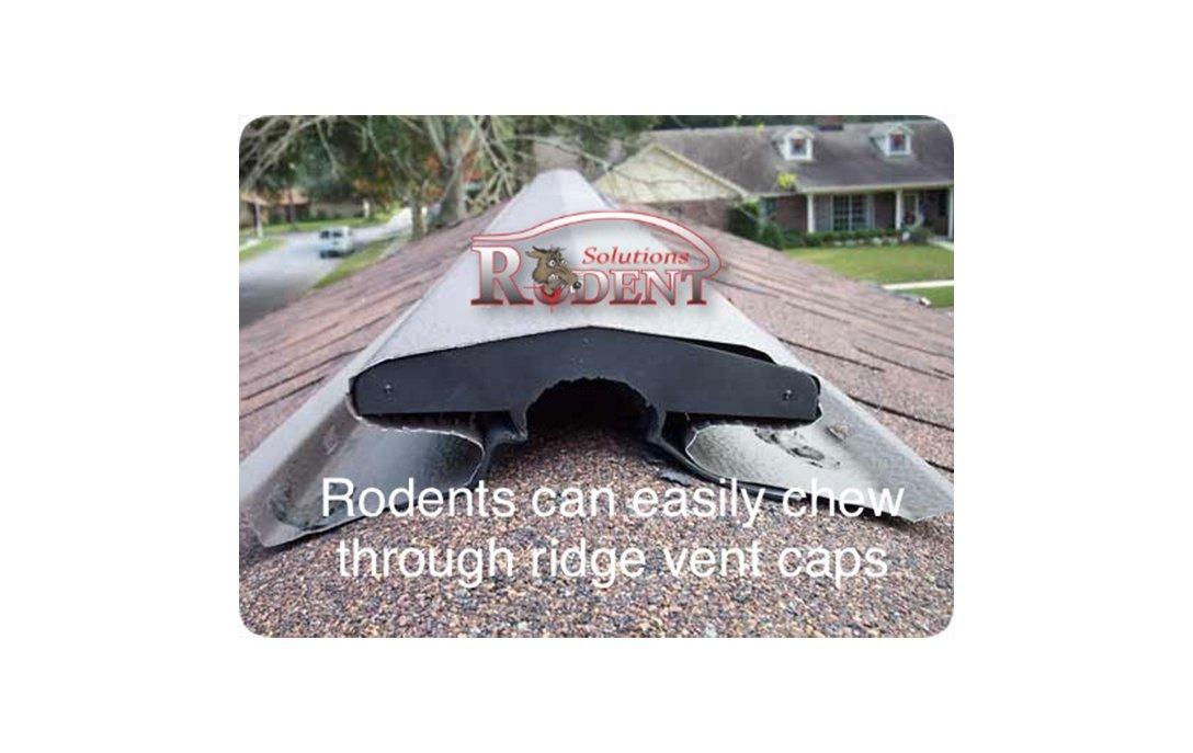 roof ridge endcap damage